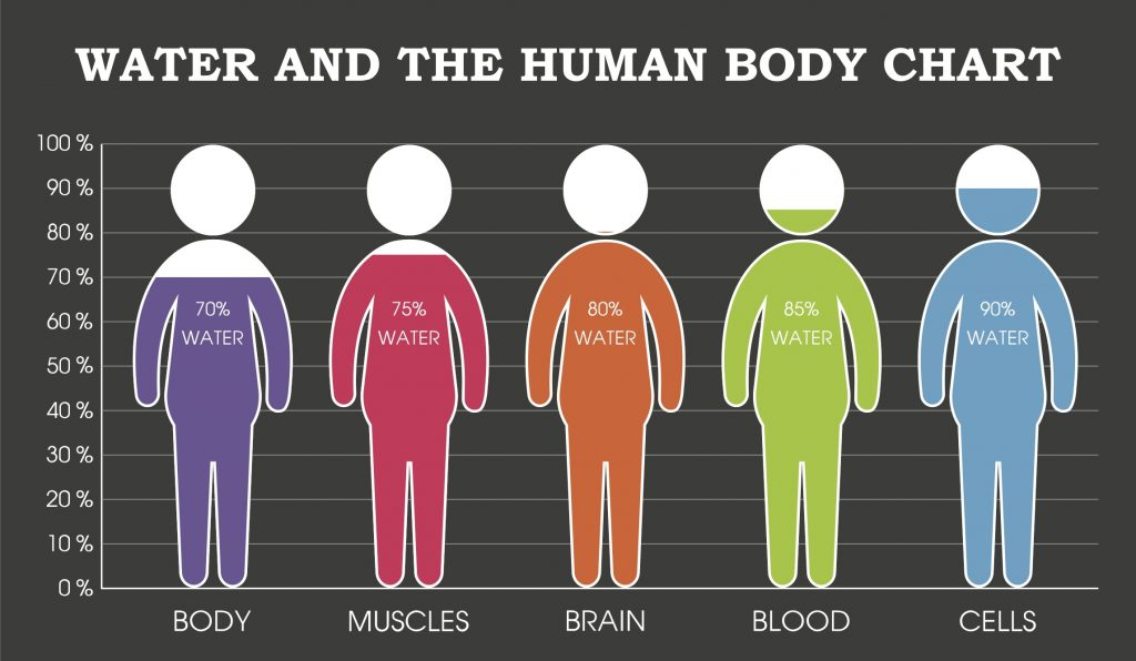 Water and the Human Body
